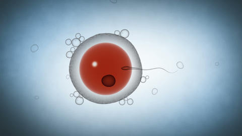 Zygote formation following sperm fertilizing the ovum Animation