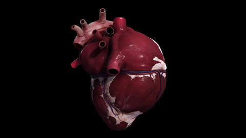 Rotating view of human heart against black background Animation