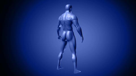 Rotating blue hologram of male human body Animation