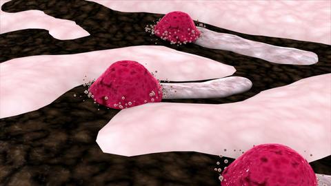 Osteoblast producing bone matrix/tissue to reform bone in remodeling process Animation
