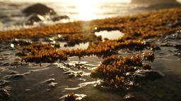 Dry moss on the wet sand 4k Live Action
