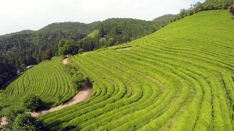 Green tea boseong Live Action