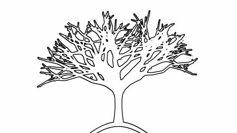 Black and White Tree Drawing Animation Animation