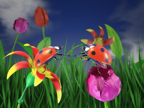 Two ladybugs on flowers Photo