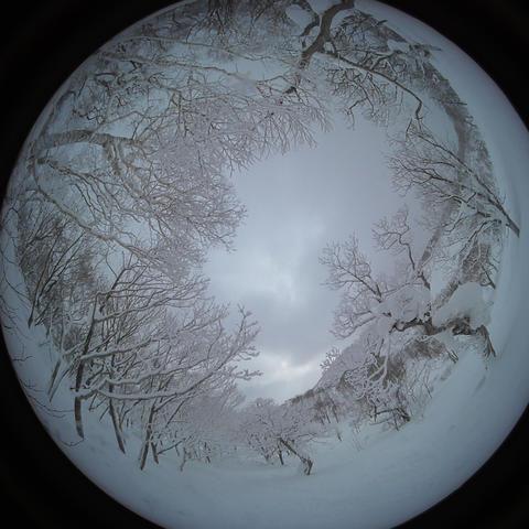 japow powder snow Snow mountain forest landscape Rime landscape 1 Live Action