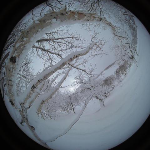 japow powder snow Snow mountain forest landscape Rime landscape 7 Live Action