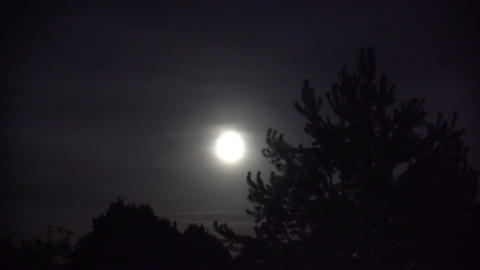 Full Moon with Night Clouds and Large Wicked Tree Footage