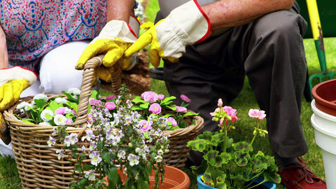 Smiling senior couple gardening together in garden Live Action