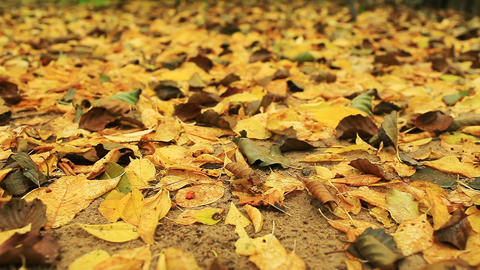 autumn leaf fall Live Action