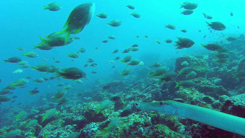 Colorful Fish Swim By A Coral Reef Footage