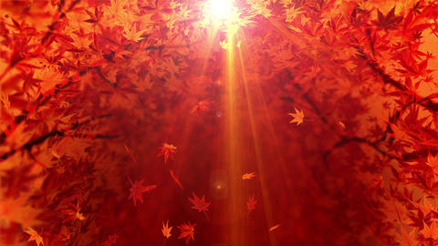 Spin of autumn leaves,Maple,CG Animation,Loop Animation