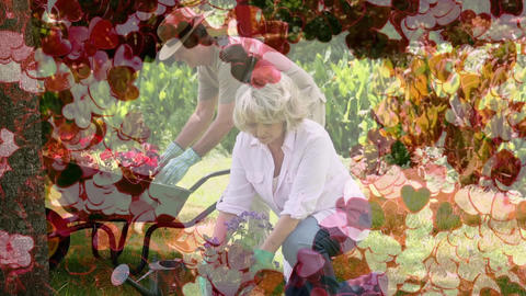 Mature couple gardening with a heart carpet on the foreground Animation