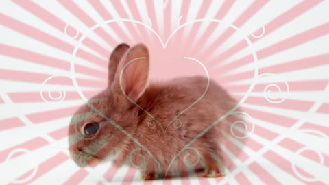 Animation of a cute rabbit with pink ray background Animation