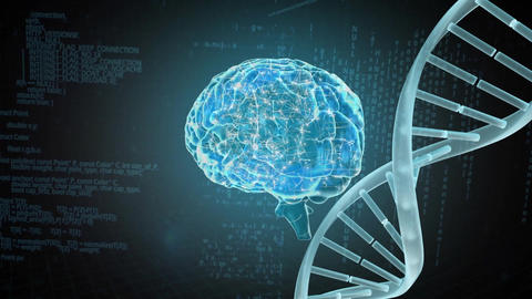 Human brain coding and DNA coding Animation