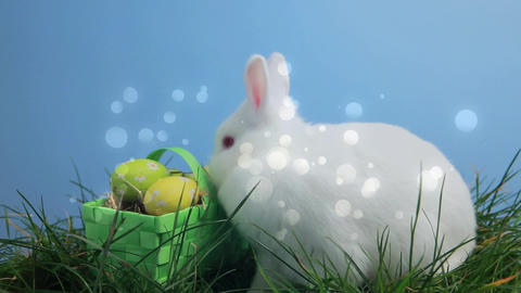 Easter bunny and eggs Animation