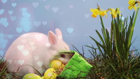 Easter bunny and eggs in a garden Animation