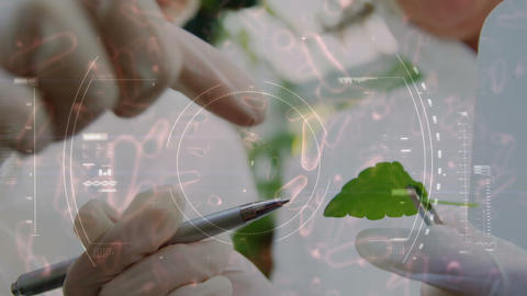 Botanist studying a leaf for microscopic organisms 4k Animation