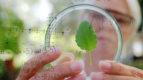 Botanist studying a leaf 4k Animation
