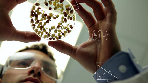 Scientist studying beans Animation