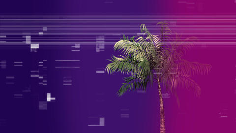 Palm tree surrounded by an animation of scrabbled and bokeh effect Animation
