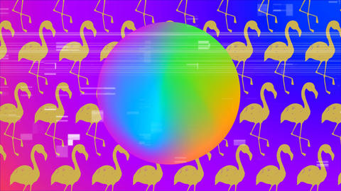Colorful circle with scrambled effect agaisnt pink flamingos Animation