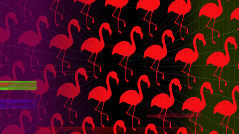 Colorful scrambled effect against pink flamingos on dark background Animation