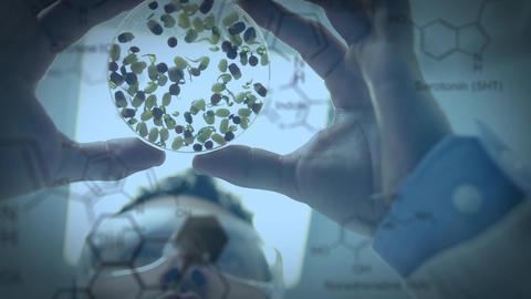 Scientist examining a petri dish Animation