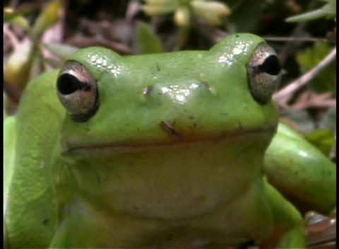 A bright green frog rests in a forest Stock Video Footage