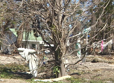 Clothing and debris hang from a tree in the aftermath of... Stock Video Footage