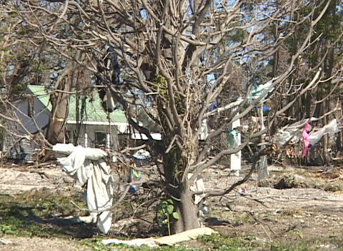 Clothing and debris hang from a tree in the aftermath of Hurricane Katrina Footage