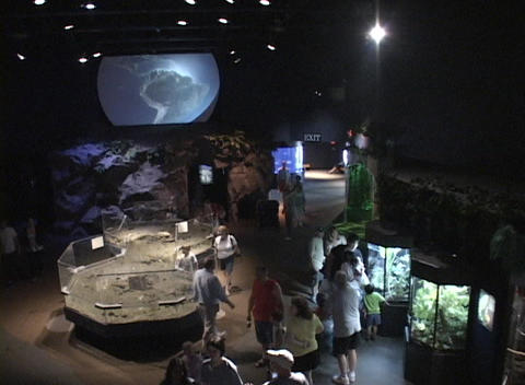 Visitors look at exhibits in a museum Stock Video Footage