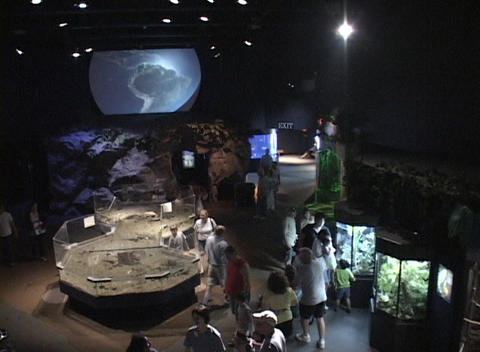 Visitors look at exhibits in a museum Footage