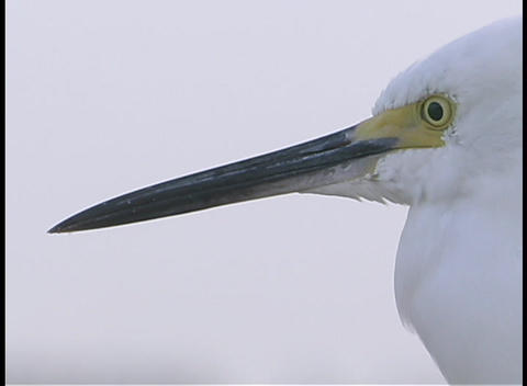 A white bird opens and closes its beak Stock Video Footage
