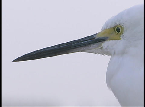 A white bird opens and closes its beak Footage