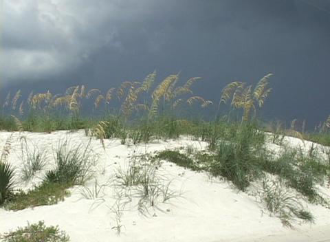 Long stalks of grass grow through melting snow on a hillside Stock Video Footage