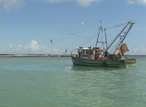 Seagulls fly around a trawler boat Stock Video Footage