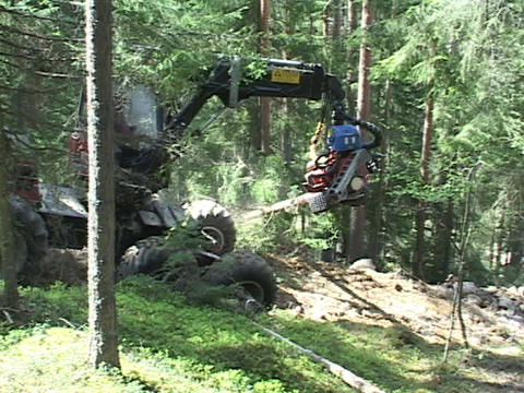 A log skidder drags trees from the forest Footage