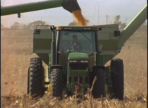 Harvested corn falls into the back of the combine as it... Stock Video Footage