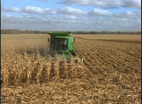 A farmer drives a combine machine through several rows of corn Live Action