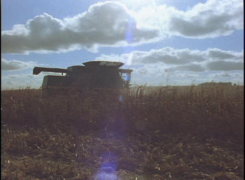 Corn debris floats through the air as a combine makes in way through rows of corn Live Action