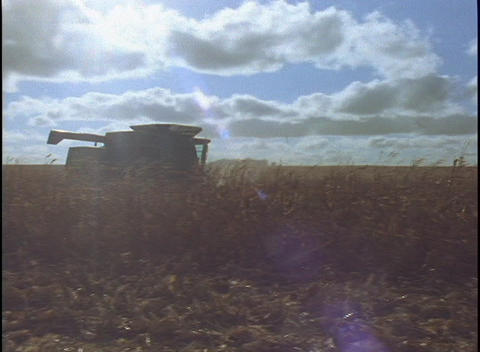 Corn debris floats through the air as a combine makes in... Stock Video Footage