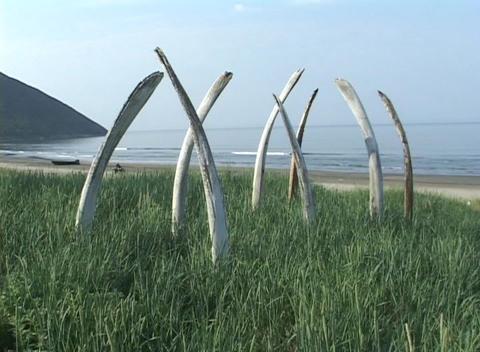 An Alaskan native drives an ATV past a sacred whalebone... Stock Video Footage