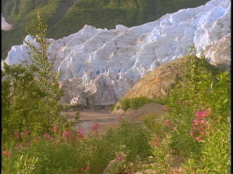 A large glacier rises beyond a field of wildflowers Stock Video Footage