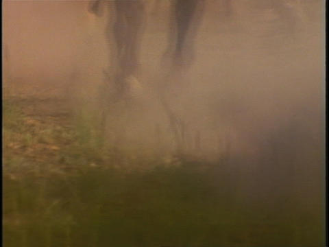 Galloping horses hooves stir up dust Stock Video Footage