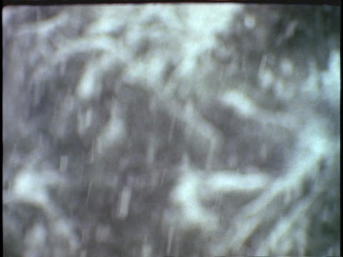 Snow falls on pine branches Footage