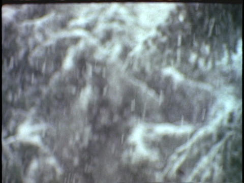 Snow falls on pine branches Stock Video Footage