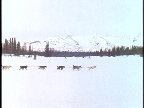 A sled is pulled by a team of dogs across a snowy Alaskan... Stock Video Footage