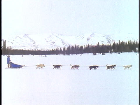 A sled is pulled by a team of dogs across a snowy Alaskan landscape Footage