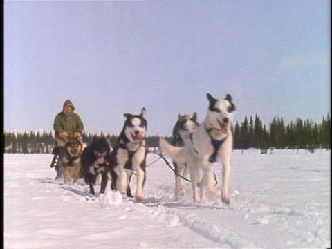 A team of dogs pulls a sled and rider across a snowy landscape Footage