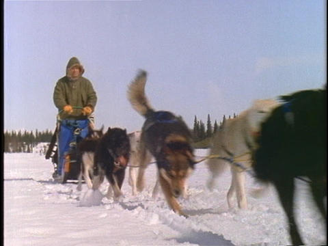 A team of dogs pulls a sled and rider across a snowy... Stock Video Footage